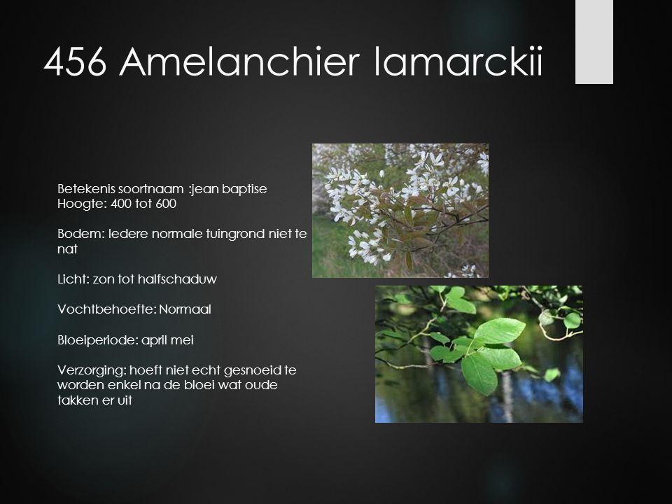 456 Amelanchier lamarckii Betekenis soortnaam :jean baptise Hoogte: 400 tot 600 Bodem: Iedere normale tuingrond niet te nat Licht: zon tot halfschaduw