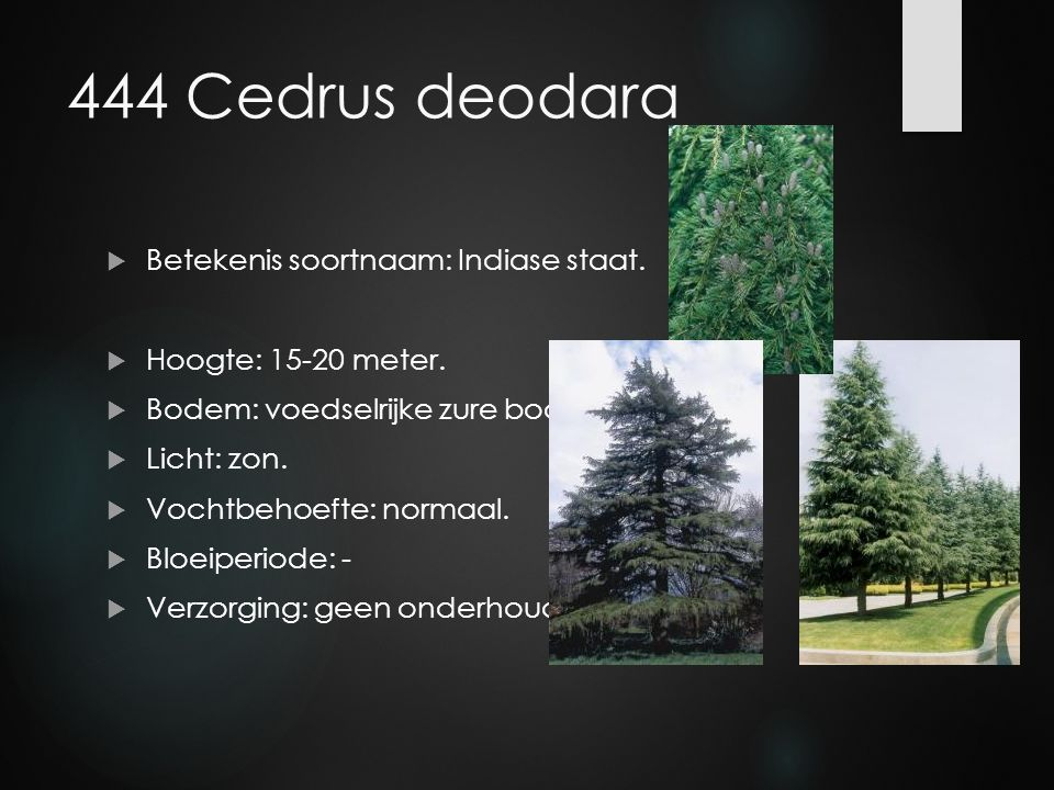 444 Cedrus deodara  Betekenis soortnaam: Indiase staat.  Hoogte: 15-20 meter.  Bodem: voedselrijke zure bodem.  Licht: zon.  Vochtbehoefte: norma