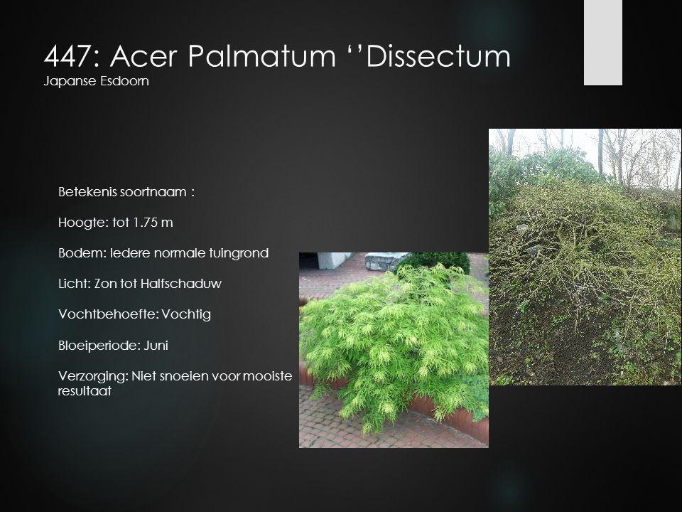 447: Acer Palmatum ''Dissectum Japanse Esdoorn Betekenis soortnaam : Hoogte: tot 1.75 m Bodem: Iedere normale tuingrond Licht: Zon tot Halfschaduw Voc