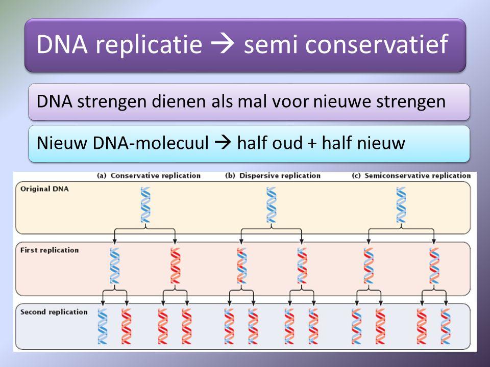 DNA replicatie  semi conservatief DNA strengen dienen als mal voor nieuwe strengenNieuw DNA-molecuul  half oud + half nieuw