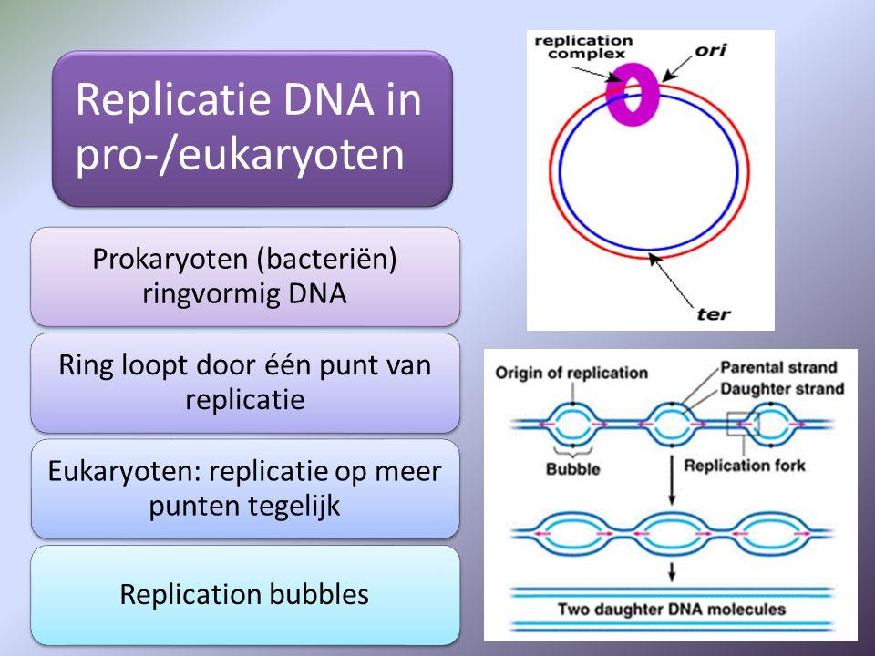 Replicatie DNA in pro-/eukaryoten Prokaryoten (bacteriën) ringvormig DNA Ring loopt door één punt van replicatie Eukaryoten: replicatie op meer punten