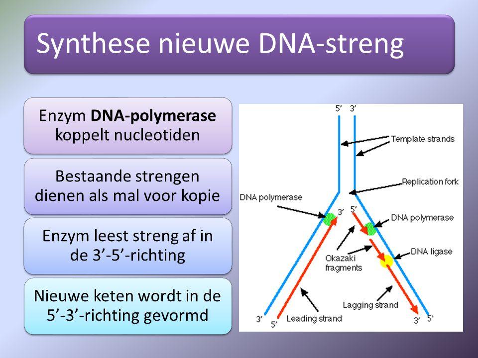 Synthese nieuwe DNA-streng Enzym DNA-polymerase koppelt nucleotiden Bestaande strengen dienen als mal voor kopie Enzym leest streng af in de 3'-5'-ric