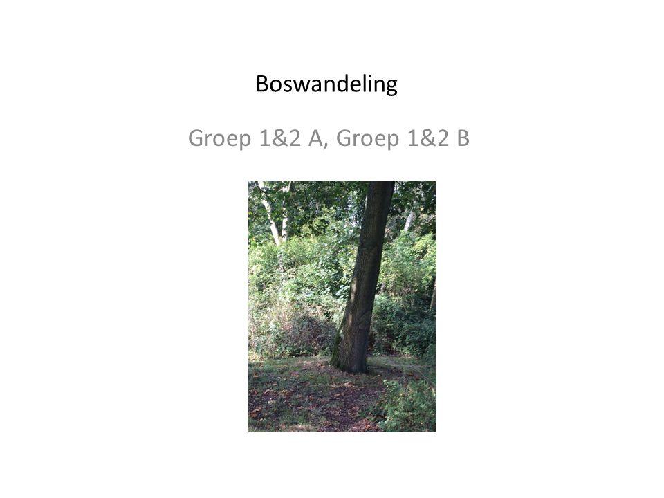 Boswandeling Groep 1&2 A, Groep 1&2 B