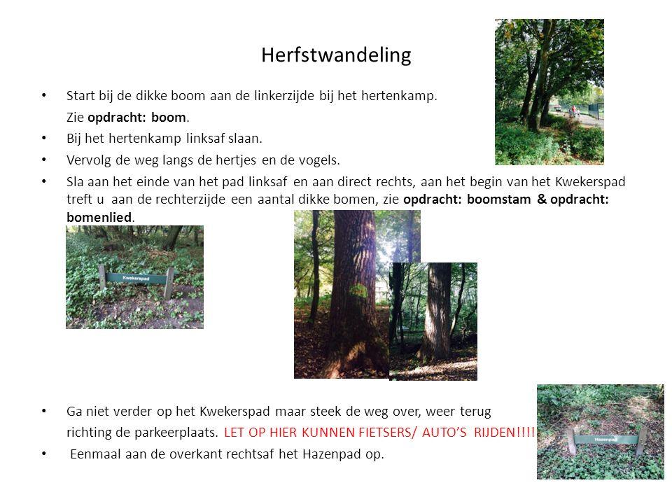 Herfstwandeling Start bij de dikke boom aan de linkerzijde bij het hertenkamp. Zie opdracht: boom. Bij het hertenkamp linksaf slaan. Vervolg de weg la