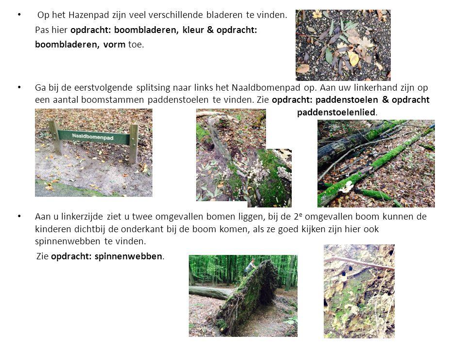 Op het Hazenpad zijn veel verschillende bladeren te vinden. Pas hier opdracht: boombladeren, kleur & opdracht: boombladeren, vorm toe. Ga bij de eerst