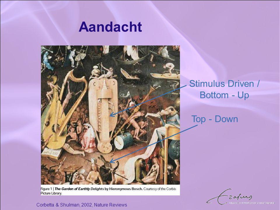 Aandacht Corbetta & Shulman, 2002, Nature Reviews Stimulus Driven / Bottom - Up Top - Down