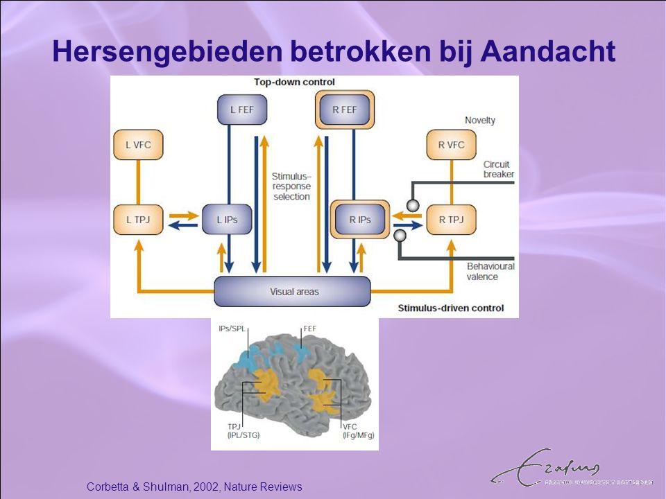Hersengebieden betrokken bij Aandacht Corbetta & Shulman, 2002, Nature Reviews