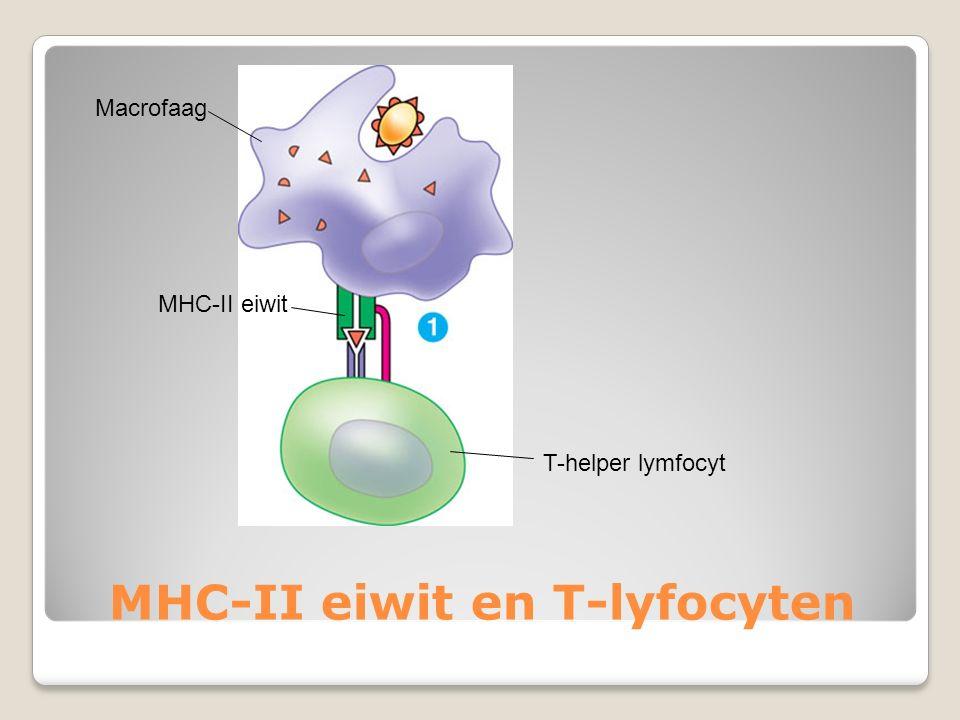 MHC-II eiwit en T-lyfocyten Macrofaag MHC-II eiwit T-helper lymfocyt