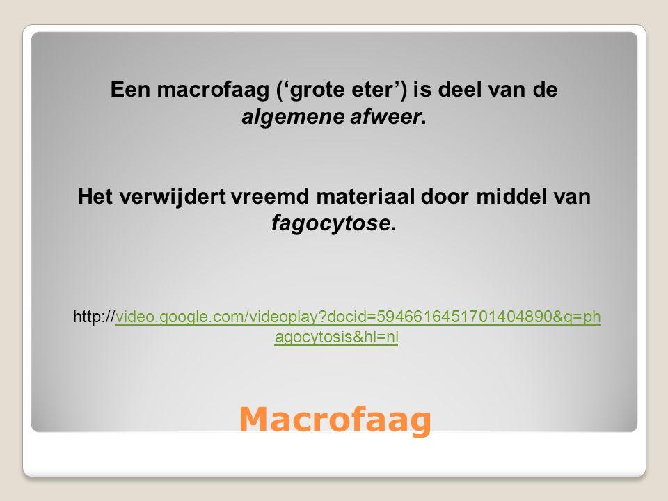 Macrofaag http://video.google.com/videoplay?docid=5946616451701404890&q=ph agocytosis&hl=nlvideo.google.com/videoplay?docid=5946616451701404890&q=ph agocytosis&hl=nl Een macrofaag ('grote eter') is deel van de algemene afweer.