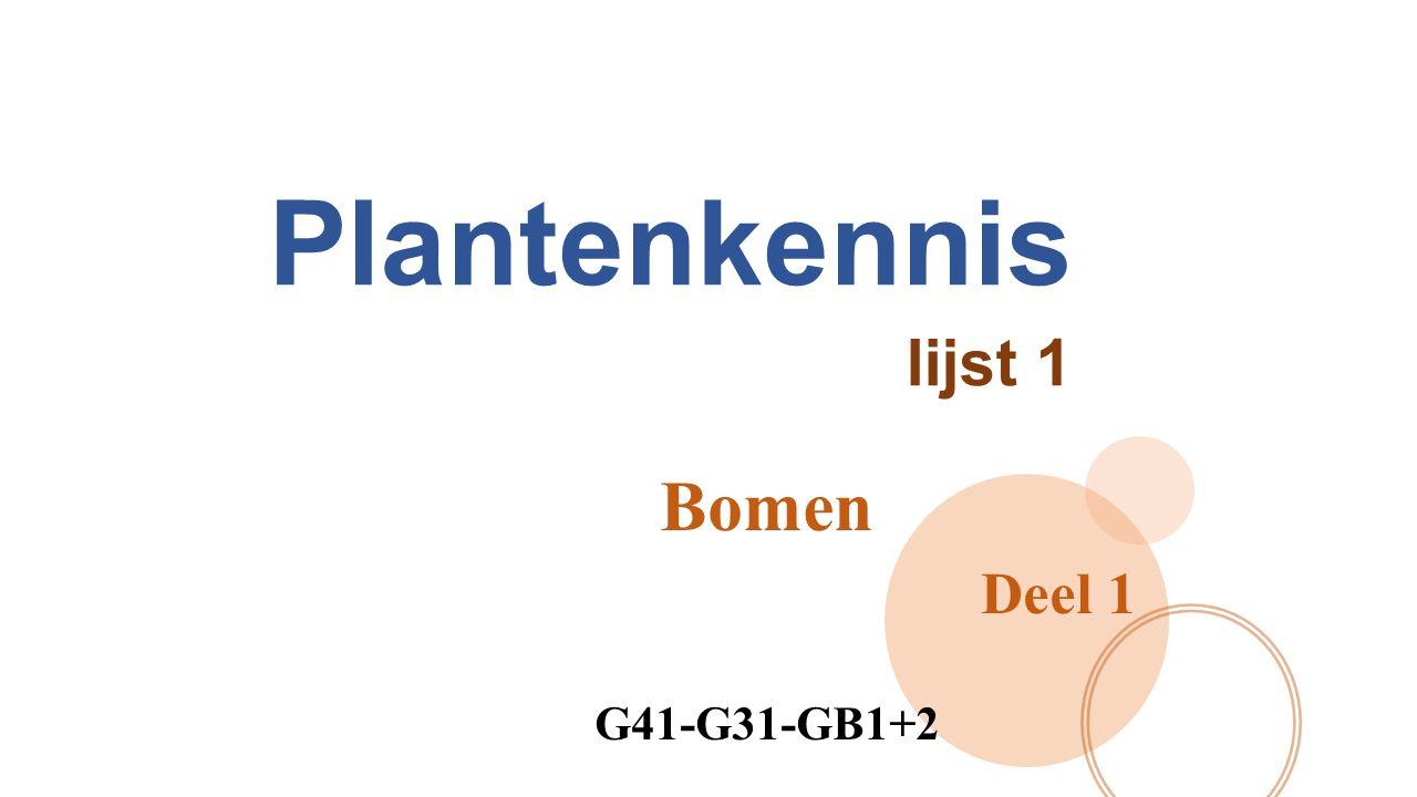 Plantenkennis lijst 1 Bomen Deel 1 G41-G31-GB1+2