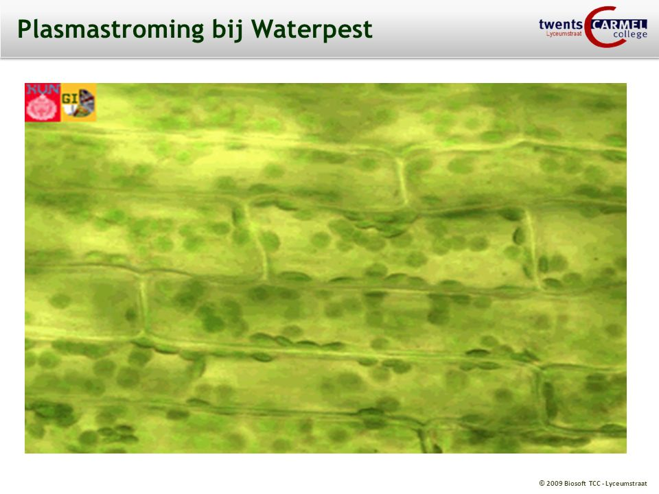 © 2009 Biosoft TCC - Lyceumstraat Plasmastroming bij Waterpest