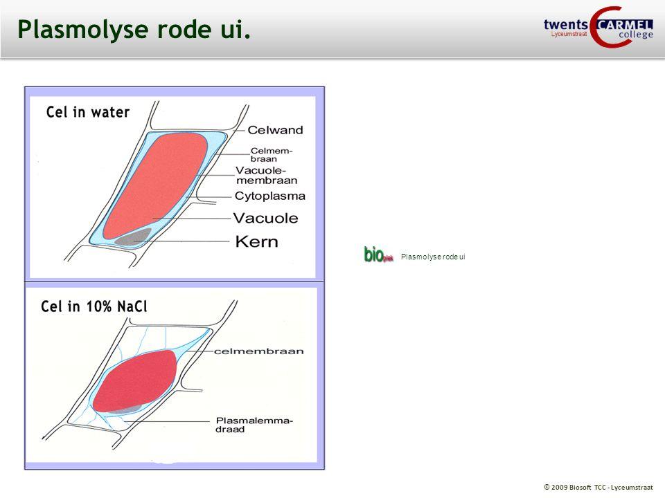 © 2009 Biosoft TCC - Lyceumstraat Osmose bij aardappelcellen.