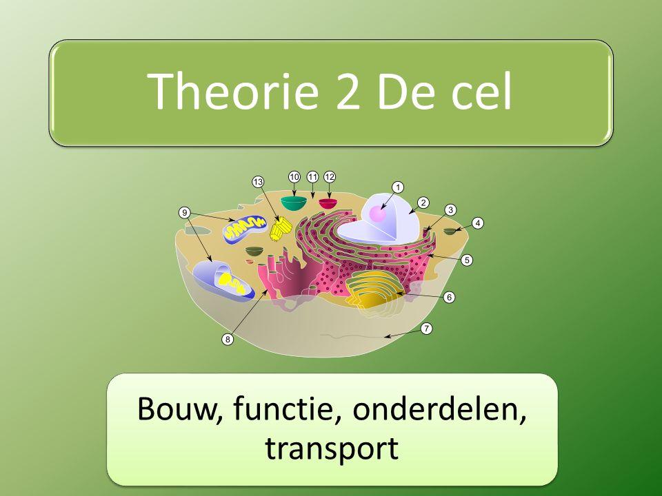 Theorie 2 De cel Bouw, functie, onderdelen, transport