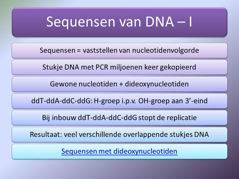 Sequensen van DNA – II DNA fragmenten gescheiden op grootte door gelelektroforese ddA-ddT-ddC-ddG: fluorescerend anders gelabeld Volgorde afgelezen als fluorescerende andere kleuren