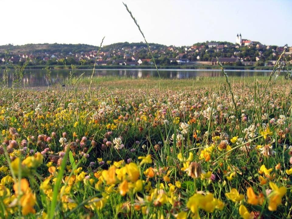 Na tal van omzwervingen vestigden de Hongaarse stammen zich in Europa en bereikten omstreeks het jaar 900 ook het Balatonmeer.