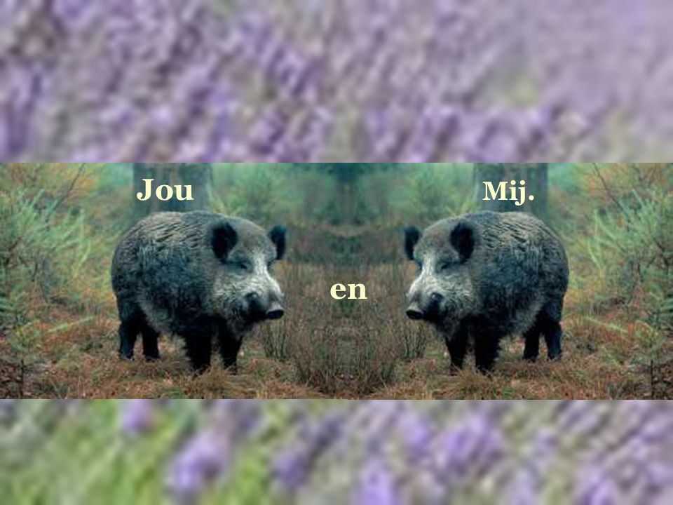 Jou Mij. en