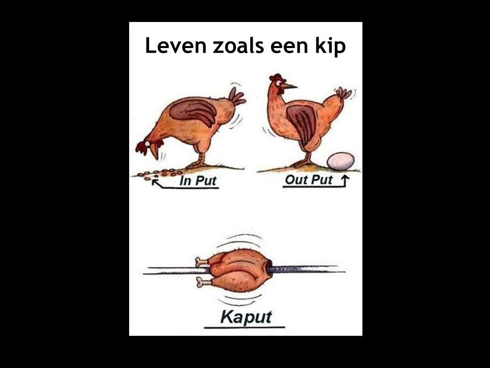 Leven zoals een kip