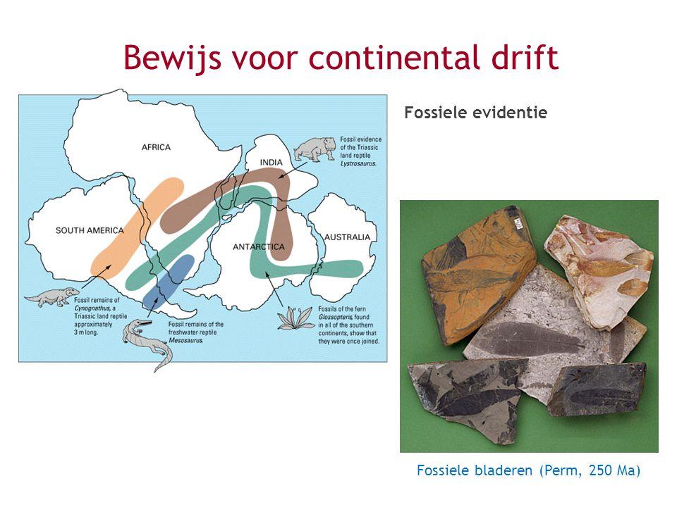 Bewijs voor continental drift Fossiele evidentie Fossiele bladeren (Perm, 250 Ma)