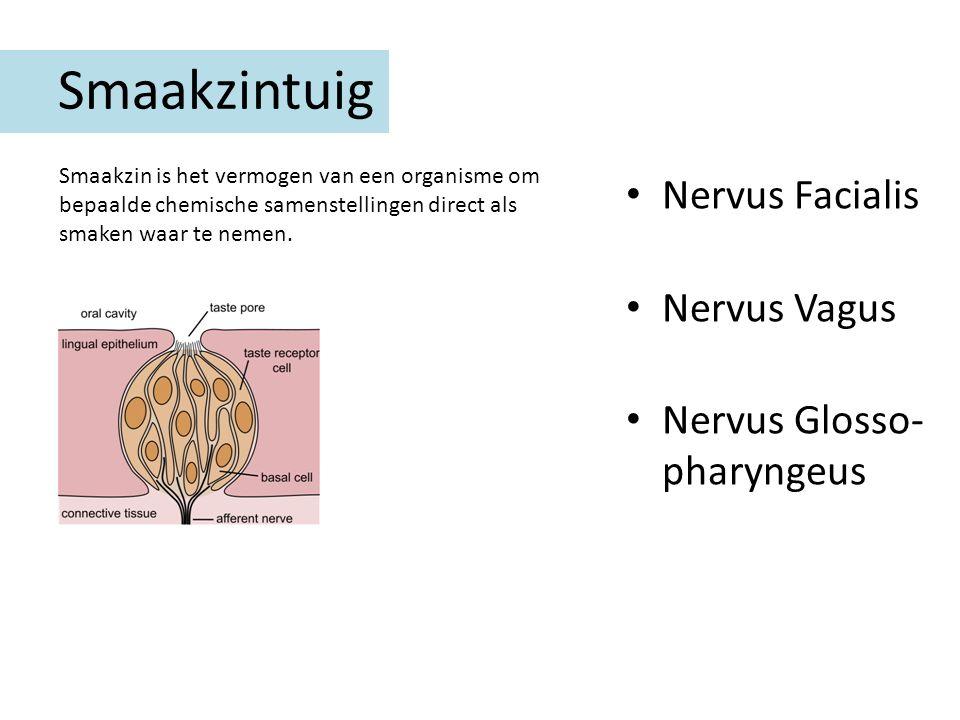 Smaakzintuig Nervus Facialis Nervus Vagus Nervus Glosso- pharyngeus Smaakzin is het vermogen van een organisme om bepaalde chemische samenstellingen d