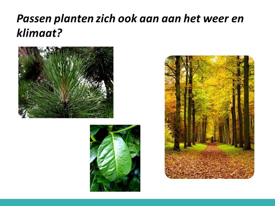 Passen planten zich ook aan aan het weer en klimaat?