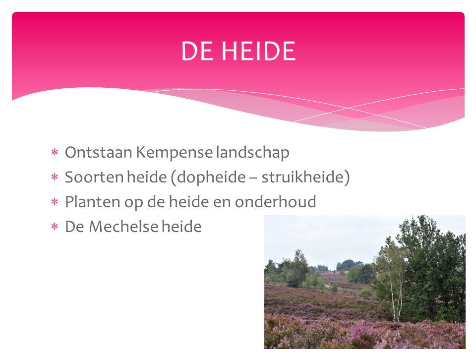  Ontstaan Kempense landschap  Soorten heide (dopheide – struikheide)  Planten op de heide en onderhoud  De Mechelse heide DE HEIDE