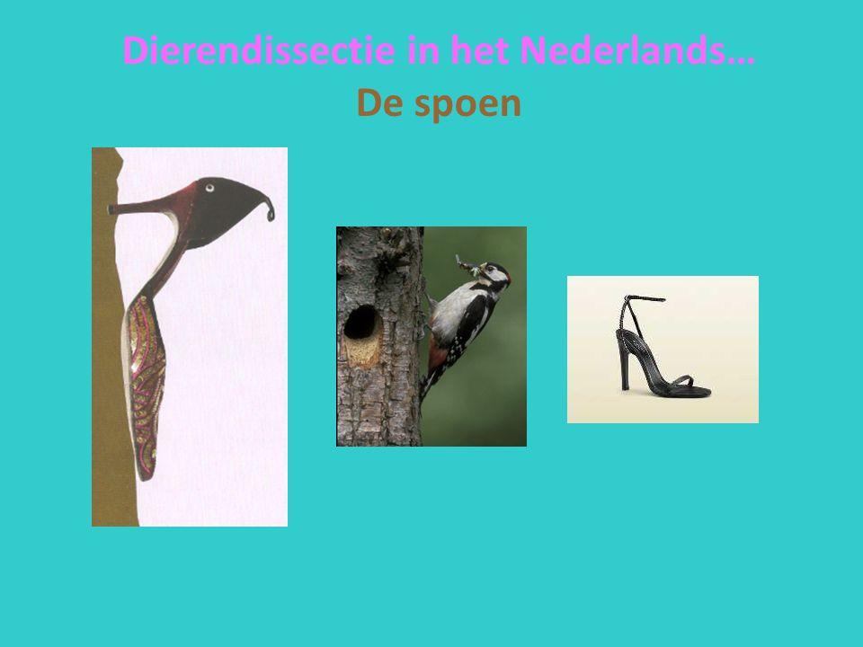 Dierendissectie in het Nederlands… De spoen