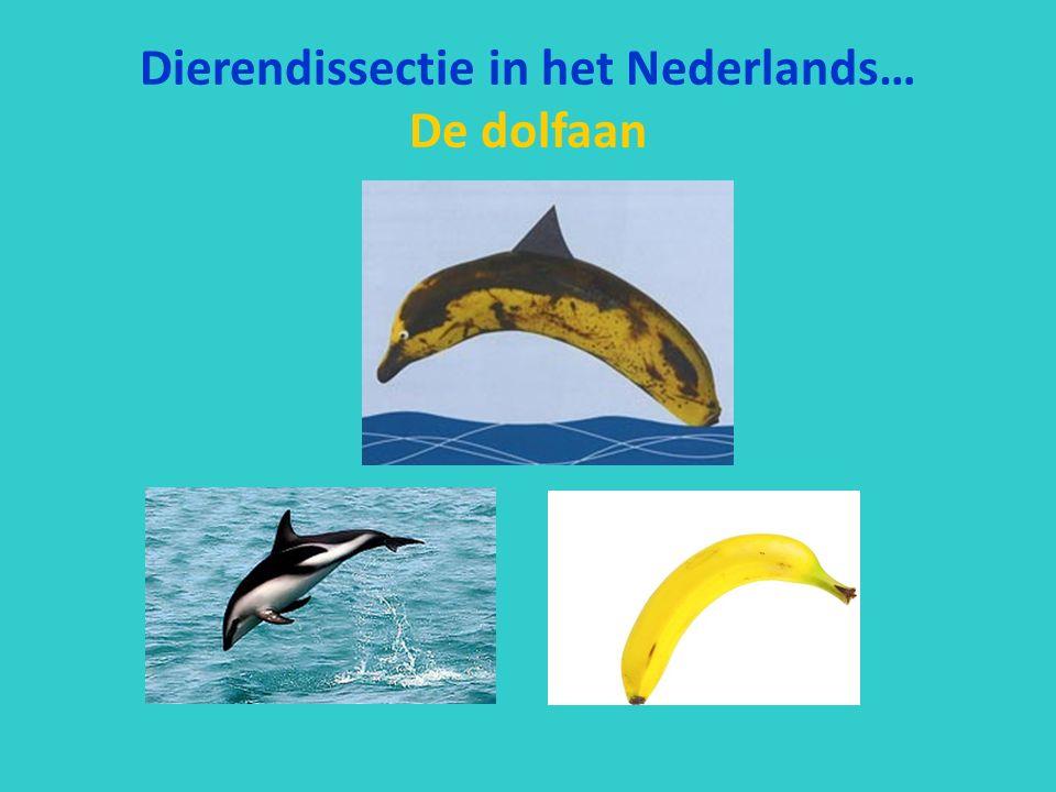 Dierendissectie in het Nederlands… De dolfaan