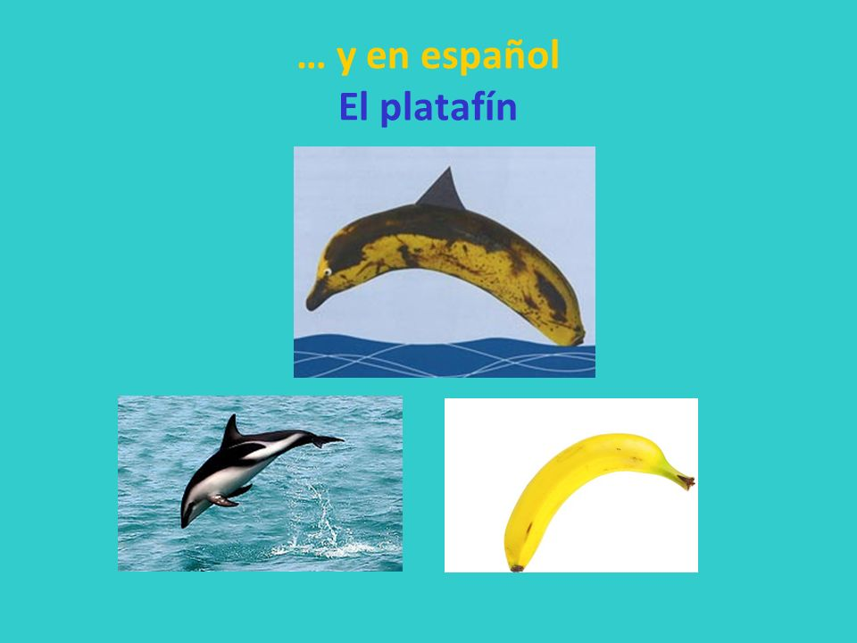 … y en español El platafín
