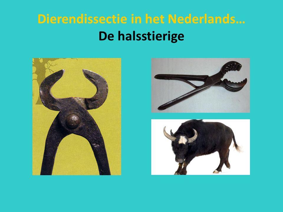 Dierendissectie in het Nederlands… De halsstierige