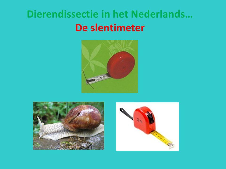 Dierendissectie in het Nederlands… De slentimeter