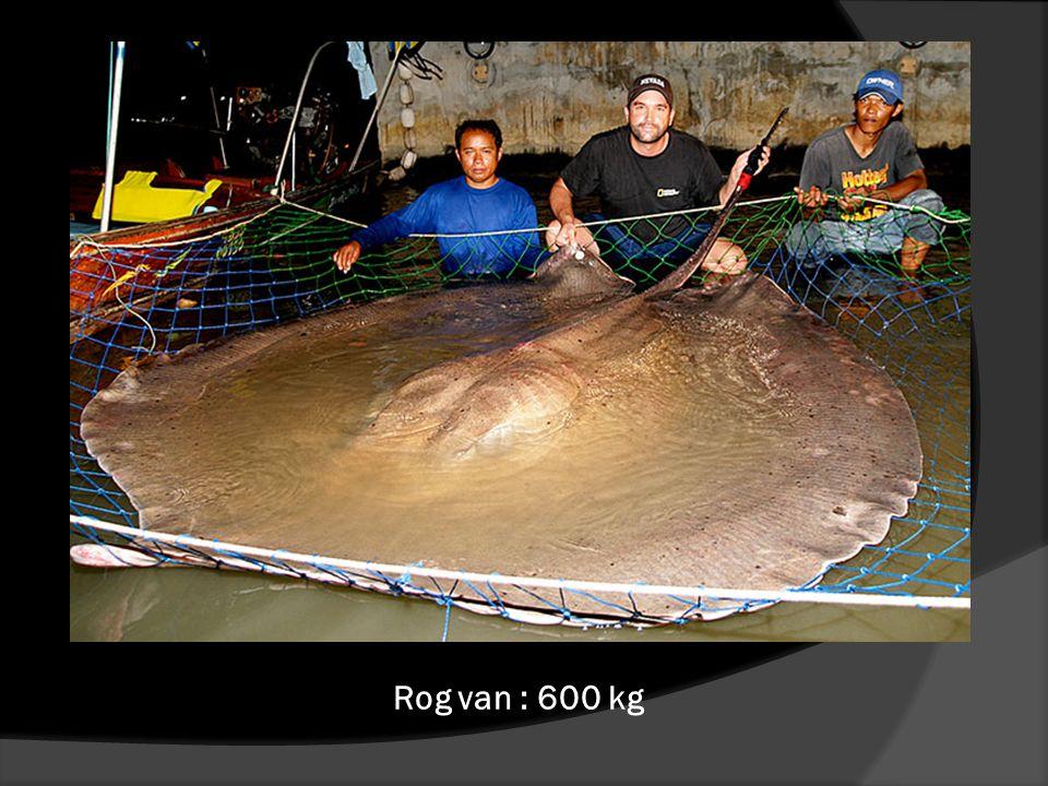 Kikker van : 3 kg