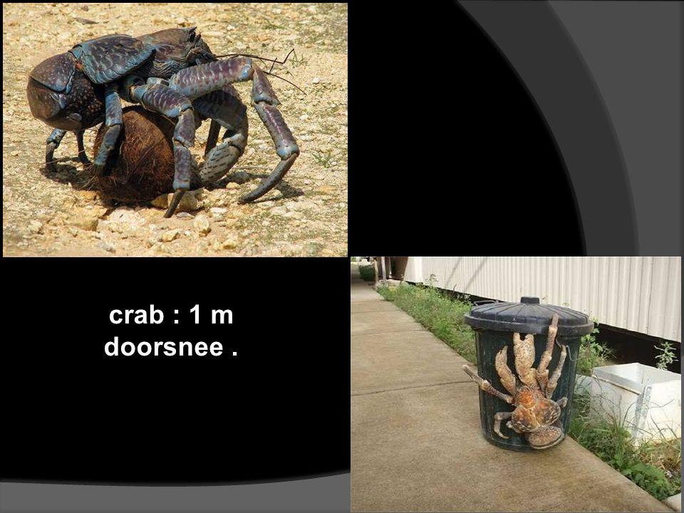 crab : 1 m doorsnee.
