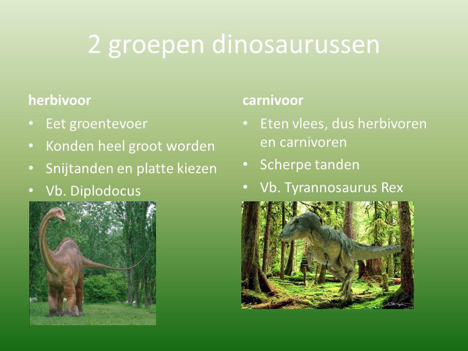 2 groepen dinosaurussen herbivoor Eet groentevoer Konden heel groot worden Snijtanden en platte kiezen Vb. Diplodocus carnivoor Eten vlees, dus herbiv
