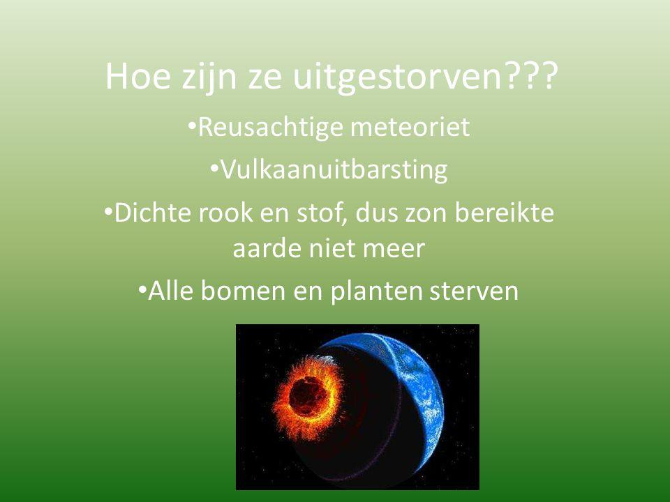 Hoe zijn ze uitgestorven??? Reusachtige meteoriet Vulkaanuitbarsting Dichte rook en stof, dus zon bereikte aarde niet meer Alle bomen en planten sterv