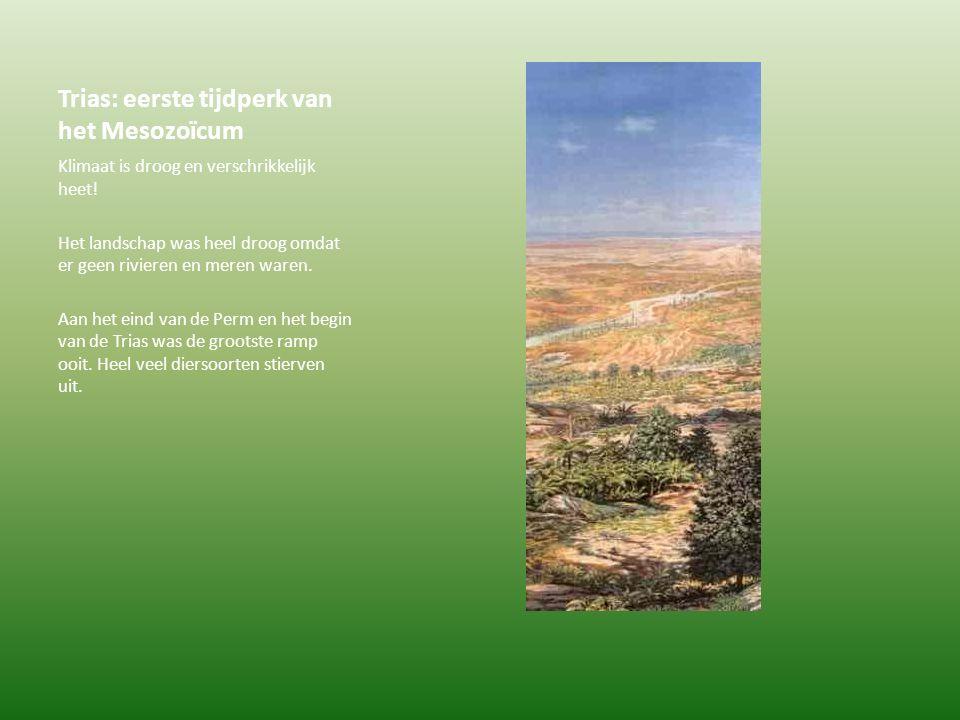Trias: eerste tijdperk van het Mesozoïcum Klimaat is droog en verschrikkelijk heet! Het landschap was heel droog omdat er geen rivieren en meren waren