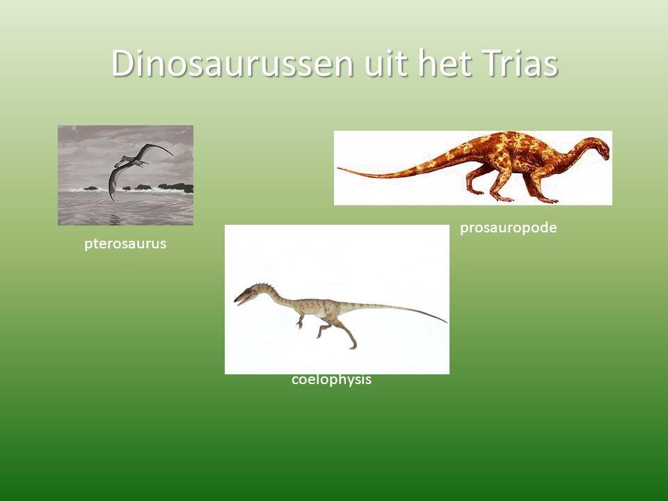 Dinosaurussen uit het Trias pterosaurus prosauropode coelophysis
