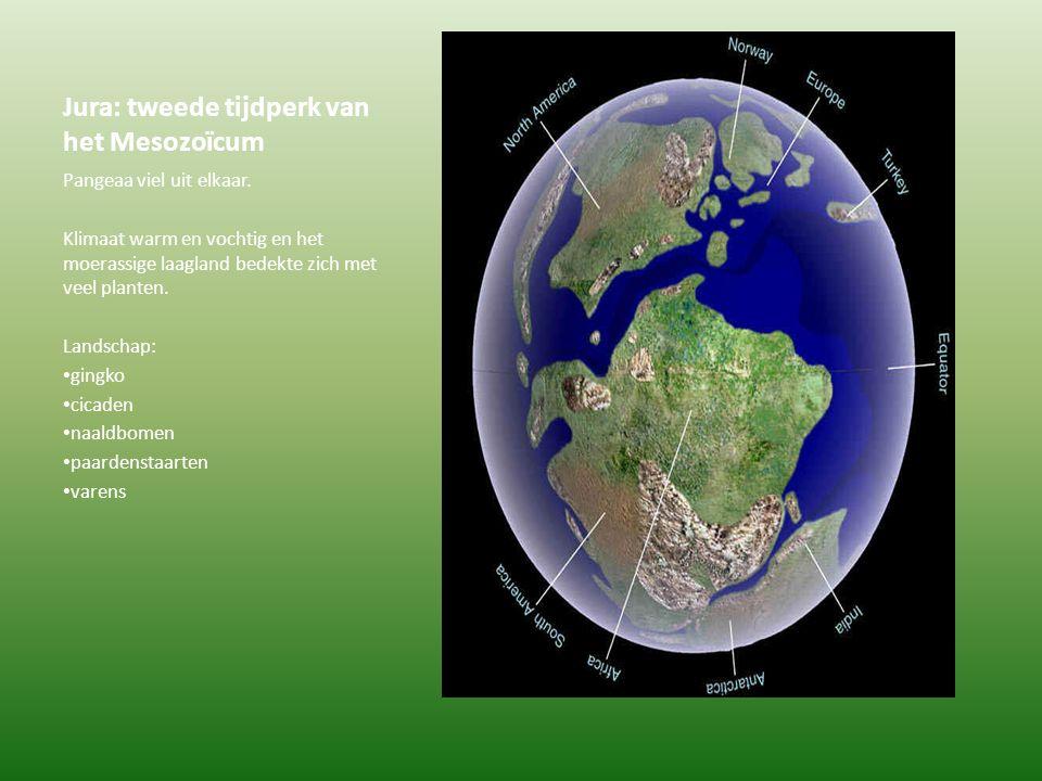 Jura: tweede tijdperk van het Mesozoïcum Pangeaa viel uit elkaar. Klimaat warm en vochtig en het moerassige laagland bedekte zich met veel planten. La