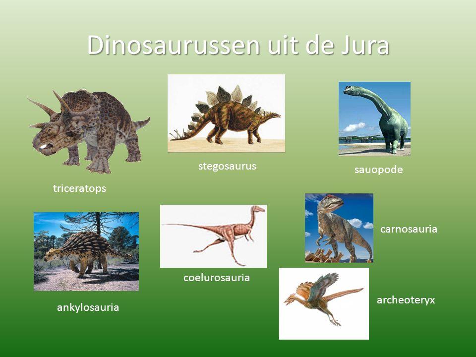 Dinosaurussen uit de Jura triceratops stegosaurus sauopode ankylosauria coelurosauria carnosauria archeoteryx