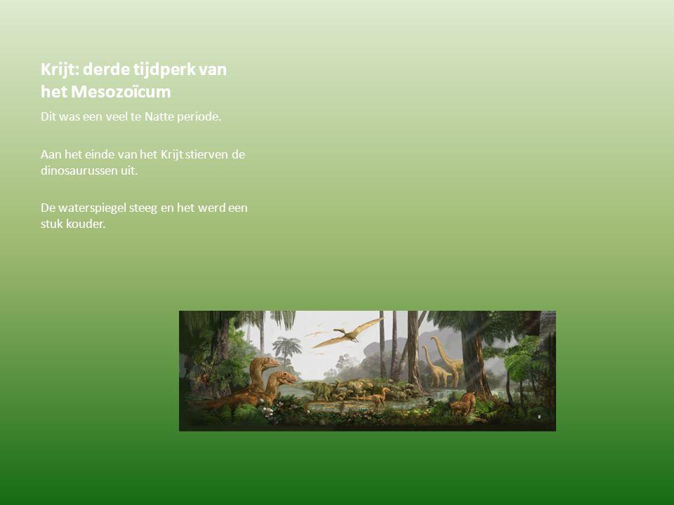 Krijt: derde tijdperk van het Mesozoïcum Dit was een veel te Natte periode. Aan het einde van het Krijt stierven de dinosaurussen uit. De waterspiegel