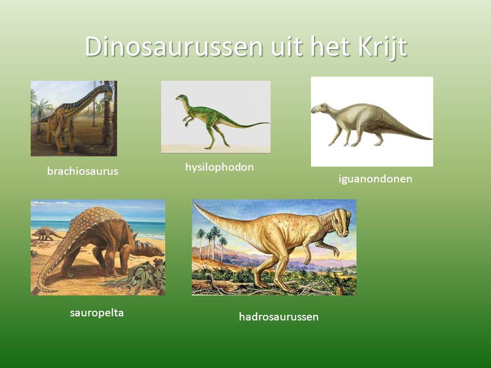 Dinosaurussen uit het Krijt brachiosaurus hysilophodon iguanondonen sauropelta hadrosaurussen