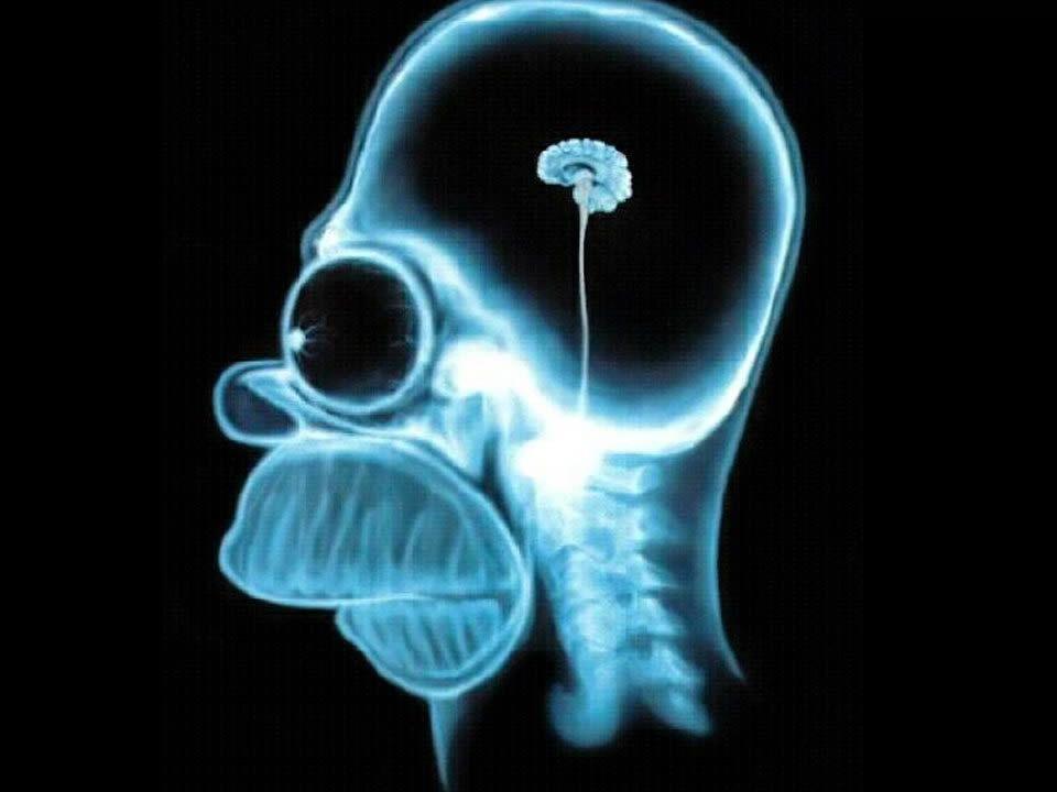 Opbouw van de Hersenen