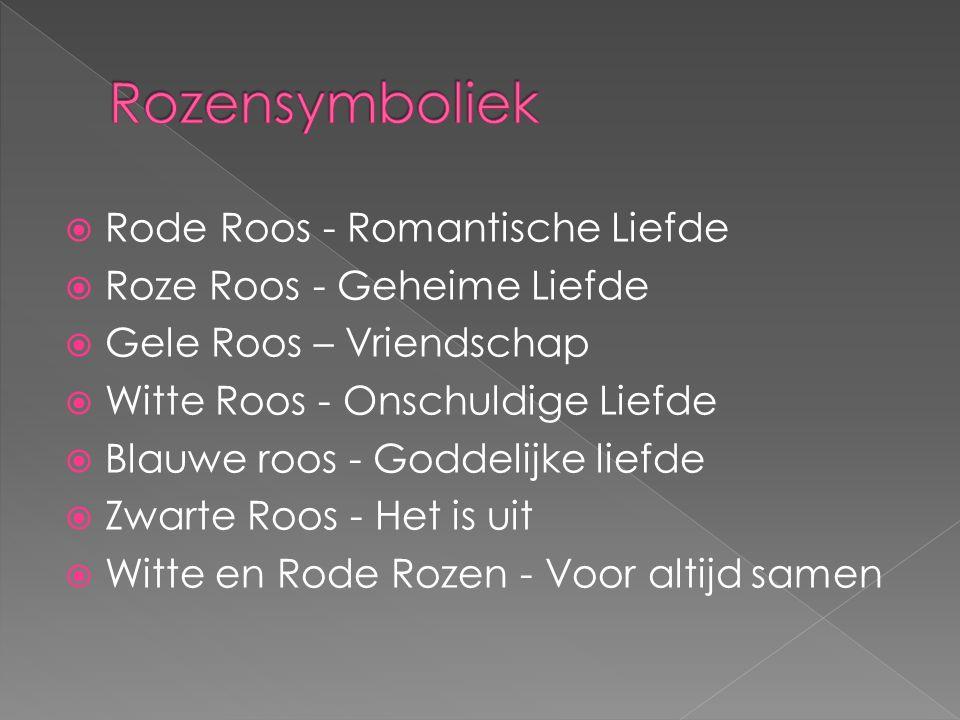  Rode Roos - Romantische Liefde  Roze Roos - Geheime Liefde  Gele Roos – Vriendschap  Witte Roos - Onschuldige Liefde  Blauwe roos - Goddelijke liefde  Zwarte Roos - Het is uit  Witte en Rode Rozen - Voor altijd samen
