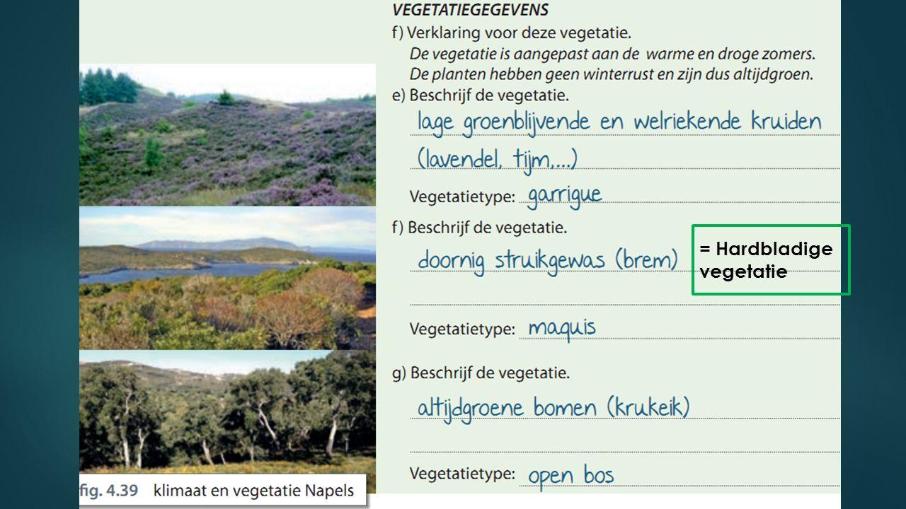 = Hardbladige vegetatie