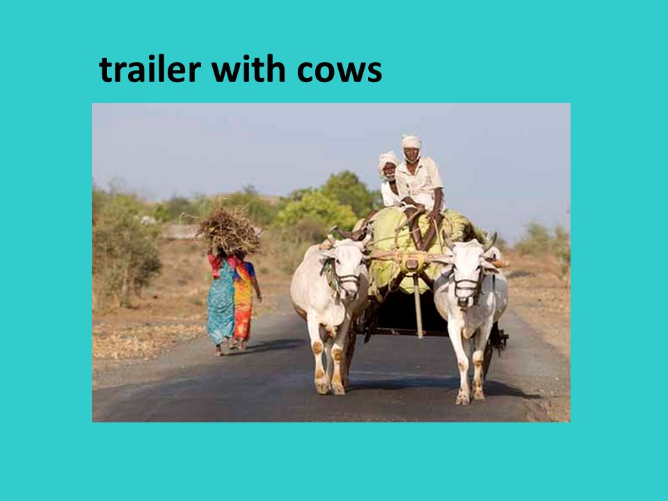trailer with cows