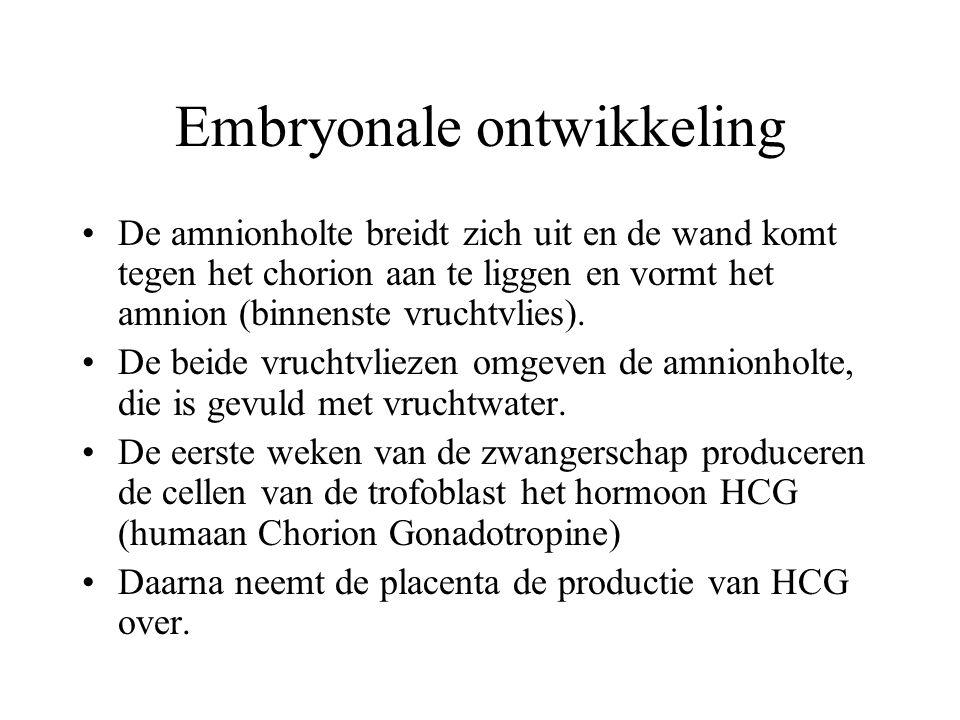Embryonale ontwikkeling De amnionholte breidt zich uit en de wand komt tegen het chorion aan te liggen en vormt het amnion (binnenste vruchtvlies).