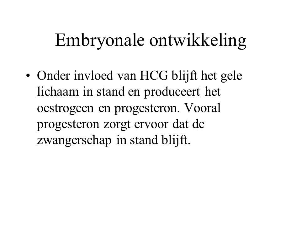 Embryonale ontwikkeling Onder invloed van HCG blijft het gele lichaam in stand en produceert het oestrogeen en progesteron.