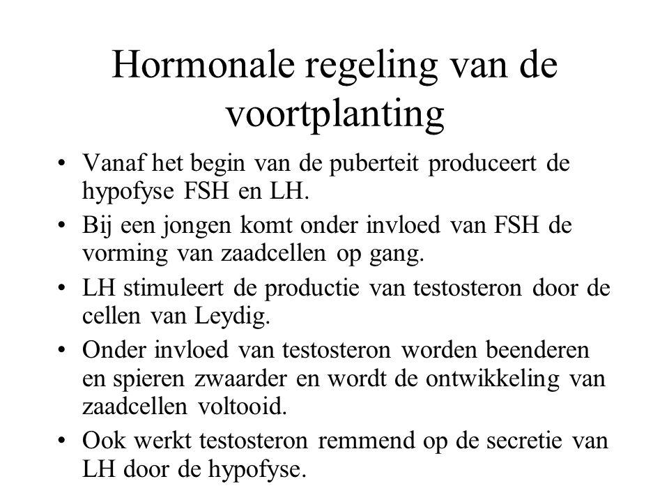 Hormonale regeling van de voortplanting Vanaf het begin van de puberteit produceert de hypofyse FSH en LH.