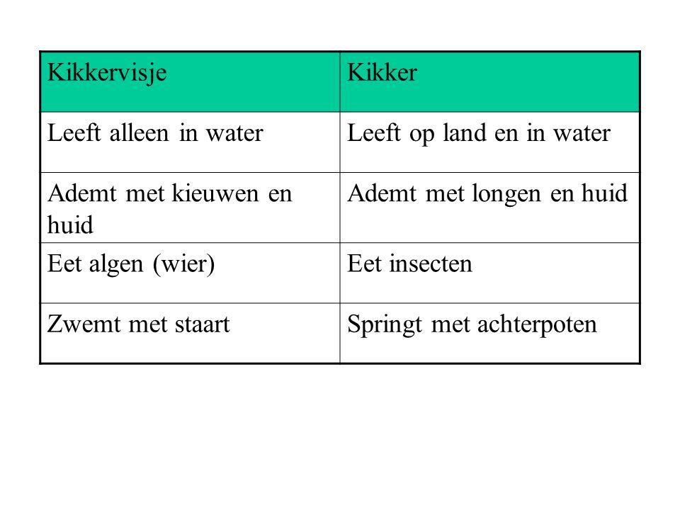 KikkervisjeKikker Leeft alleen in waterLeeft op land en in water Ademt met kieuwen en huid Ademt met longen en huid Eet algen (wier)Eet insecten Zwemt