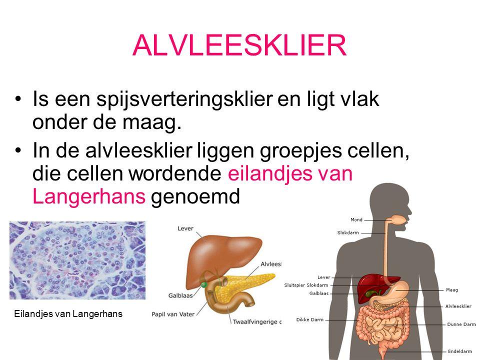 ELANDJES VAN LANGERHANS Produceren: insuline en glucagon Doormiddel van deze hormonen wordt de bloedsuikerspiegel (glucosegehalte) op pijl gehouden.