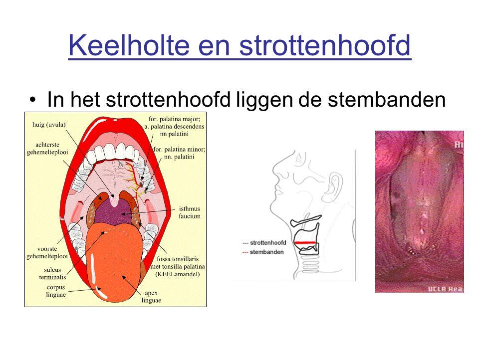 Keelholte en strottenhoofd In het strottenhoofd liggen de stembanden